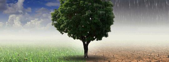 Klimaatverandering en hooikoorts